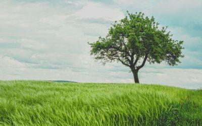 Wissensbaum